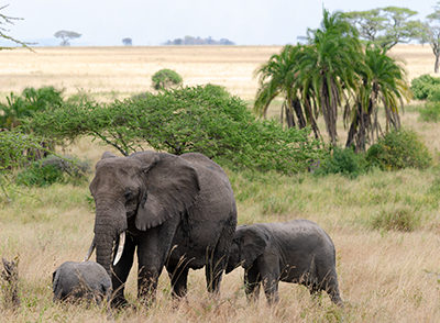 Décoration murale en métal éléphants d'Afrique